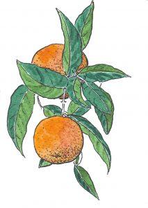 Naranjas-Cristóbal Aguilar