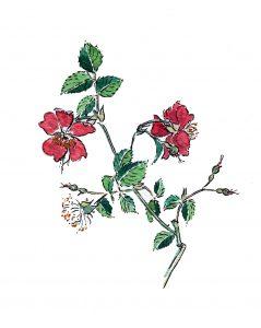 Rosa-Cristóbal Aguilar